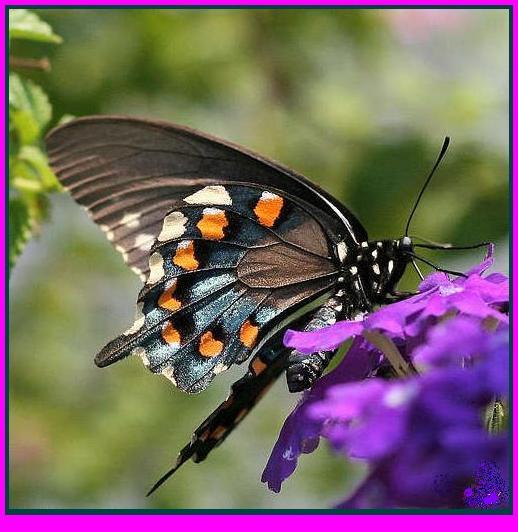 www.casa-delle-farfalle
