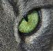 wikimedia-Cats_eye