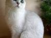 www.peppercatsnarodru