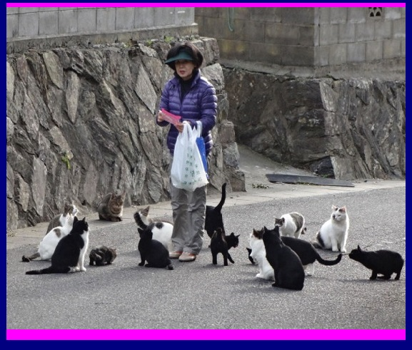 these-two-japanese-islands-have-the-cutest-cat-infestation-8