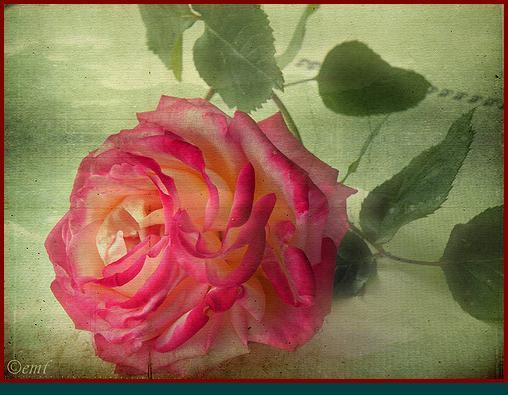 flickr_com-by-flo la rosa